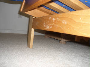 mold growth on bed frame